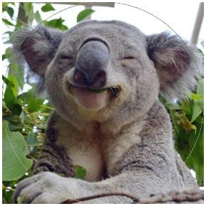 small-images-koala